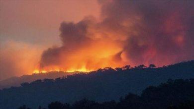 صورة حرائق غابات الجزائر.. الحكومة تعلن الحداد بعد وفاة 65 شخصا